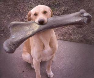 Bones Dangerous to Dogs